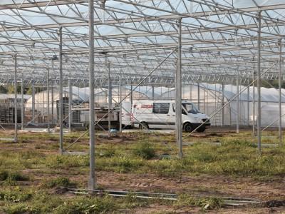 00010 Lochristi Belgie Kassenbouw Olsthoorn Greenhouse