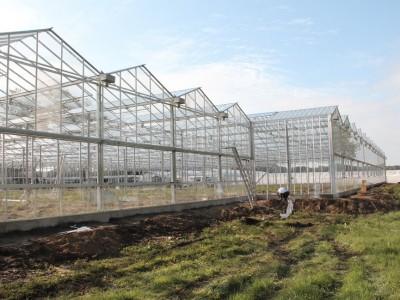 00013 Lochristi Belgie Kassenbouw Olsthoorn Greenhouse