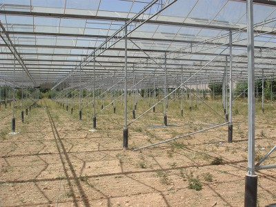 Doostwand iran Olsthoorn Greenhouse 1