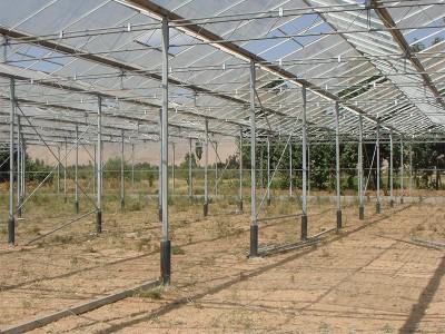 Doostwand iran Olsthoorn Greenhouse 7