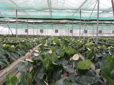 Doostwand iran Olsthoorn Greenhouse 8