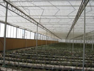 Kermanshah iran Olsthoorn Greenhouse 10