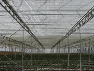 Kermanshah iran Olsthoorn Greenhouse 12