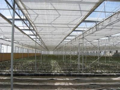 Kermanshah iran Olsthoorn Greenhouse 13
