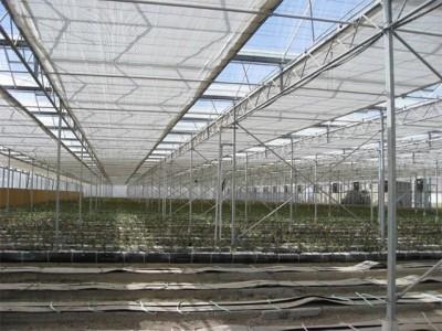 Kermanshah iran Olsthoorn Greenhouse 14