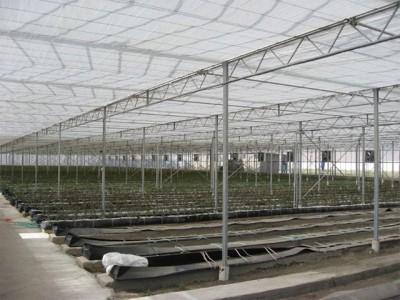 Kermanshah iran Olsthoorn Greenhouse 4