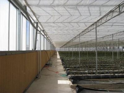 Kermanshah iran Olsthoorn Greenhouse 5