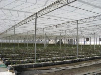 Kermanshah iran Olsthoorn Greenhouse 6
