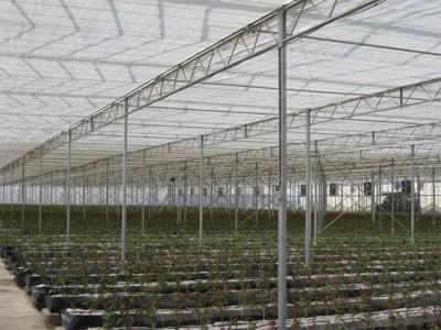 Kermanshah iran Olsthoorn Greenhouse 7