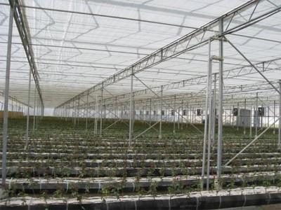 Kermanshah iran Olsthoorn Greenhouse 9
