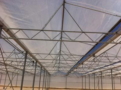 Shiraz Iran Olsthoorn Greenhouse00006