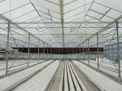 Tabriz iran Olsthoorn Greenhouse 12