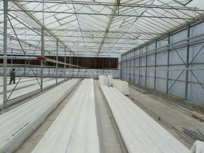 Tabriz iran Olsthoorn Greenhouse 13