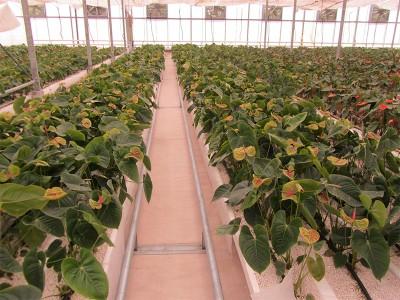 Tabriz iran Olsthoorn Greenhouse 15