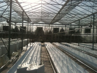 Tabriz iran Olsthoorn Greenhouse 4