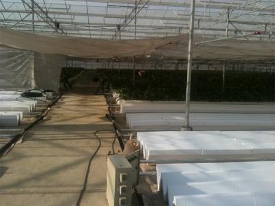 Tabriz iran Olsthoorn Greenhouse 5
