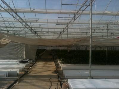 Tabriz iran Olsthoorn Greenhouse 6