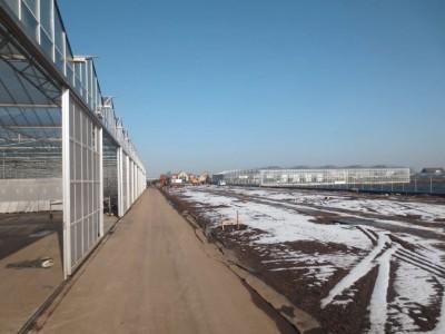 00002 Boskoop Nederland kassenbouw olsthoorn greenhouse