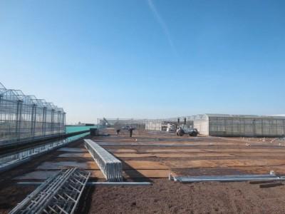 00007 Boskoop Nederland kassenbouw olsthoorn greenhouse