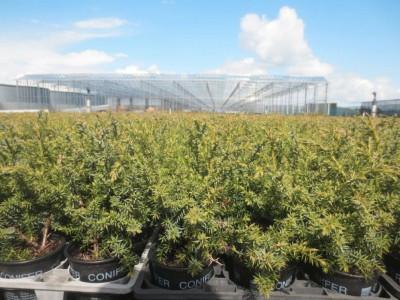 00014 Boskoop Nederland kassenbouw olsthoorn greenhouse