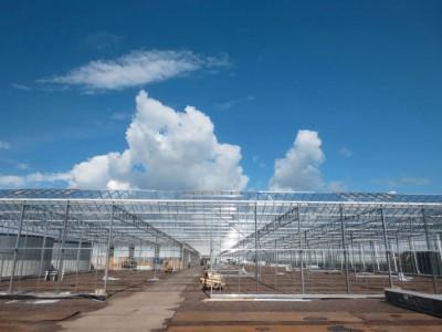 00015 Boskoop Nederland kassenbouw olsthoorn greenhouse