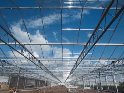 00019 Boskoop Nederland kassenbouw olsthoorn greenhouse