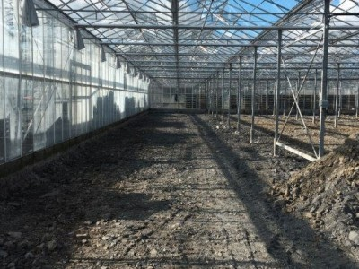 00015 Tandragee Northern Ireland Kassenbouw Olsthoorn Greenhouse Projects