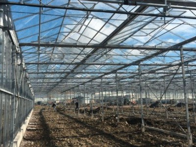 00018 Tandragee Northern Ireland Kassenbouw Olsthoorn Greenhouse Projects