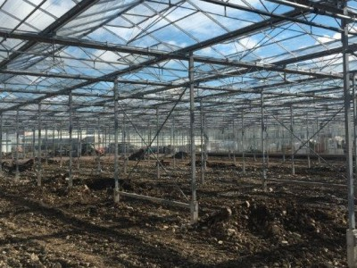 00019 Tandragee Northern Ireland Kassenbouw Olsthoorn Greenhouse Projects