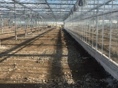 00029 Tandragee Northern Ireland Kassenbouw Olsthoorn Greenhouse Projects