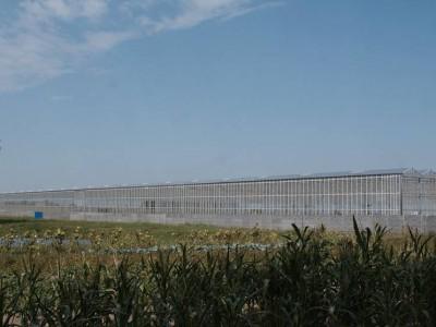 00036 Blaszki Polen kassenbouw olsthoorn greenhouse