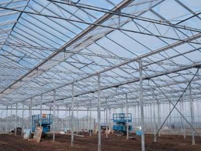 00003 Pleszew Polen kassenbouw olsthoorn greenhouse