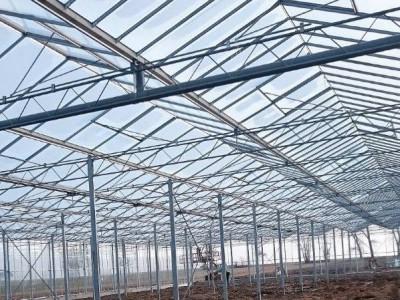 00004 Pleszew Polen kassenbouw olsthoorn greenhouse