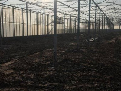00007 Pleszew Polen kassenbouw olsthoorn greenhouse