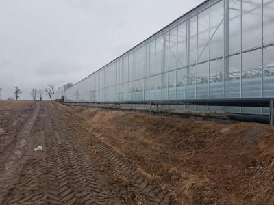 00014 Pleszew Polen kassenbouw olsthoorn greenhouse
