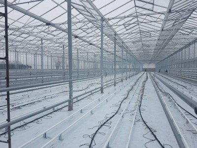 00015 Pleszew Polen kassenbouw olsthoorn greenhouse