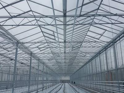 00017 Pleszew Polen kassenbouw olsthoorn greenhouse