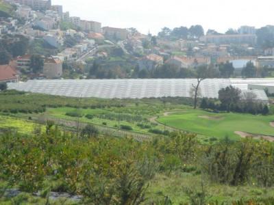 00014 Madeira Portugal Olsthoorn