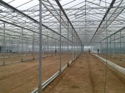00001 Iasi Roemenie kassenbouw olsthoorn greenhouse