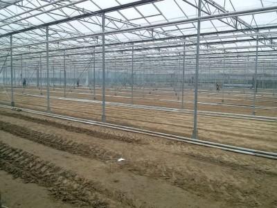 00004 Iasi Roemenie kassenbouw olsthoorn greenhouse