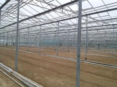 00005 Iasi Roemenie kassenbouw olsthoorn greenhouse