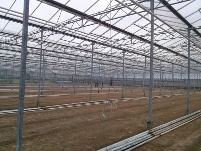 00006 Iasi Roemenie kassenbouw olsthoorn greenhouse