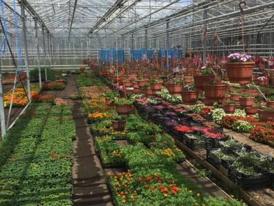Chehov Rusland Olsthoorn Greenhouse00008