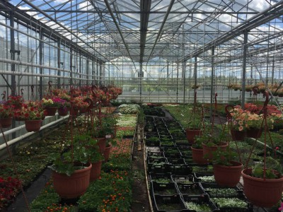 Chehov Rusland Olsthoorn Greenhouse00009