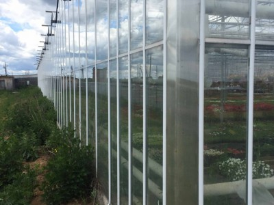 Chehov Rusland Olsthoorn Greenhouse00013