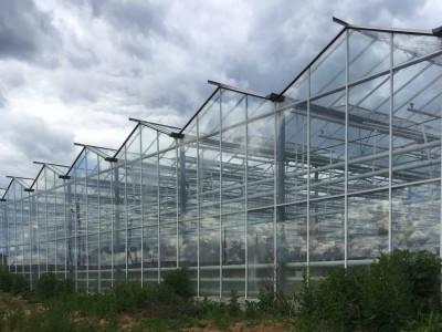 Chehov Rusland Olsthoorn Greenhouse00015