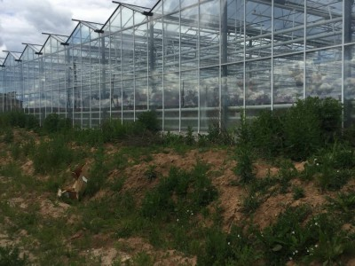 Chehov Rusland Olsthoorn Greenhouse00016