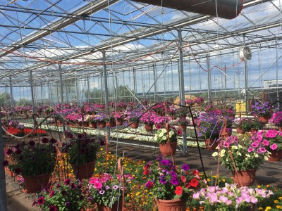 Moskou Rusland Olsthoorn Greenhouse00003