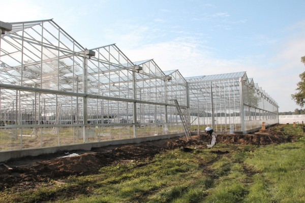 Lochristi Belgie Kassenbouw Olsthoorn Greenhouse Projects 13
