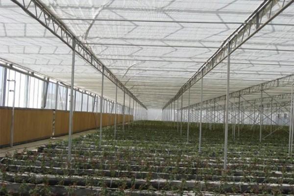 Kermanshah iran Olsthoorn Greenhouse 11